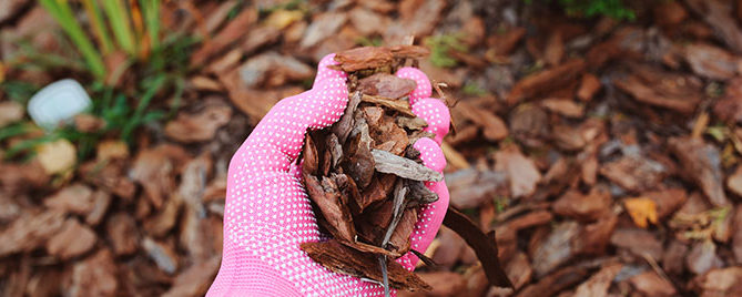 Hand holding mulch in the garden