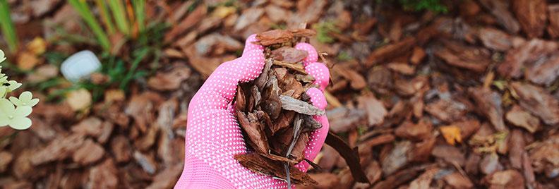 Hand holding mulch in the garden