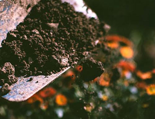 Soil 101