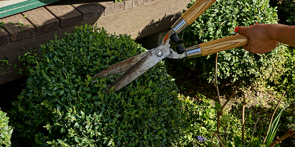 garden shears trimming shrubs