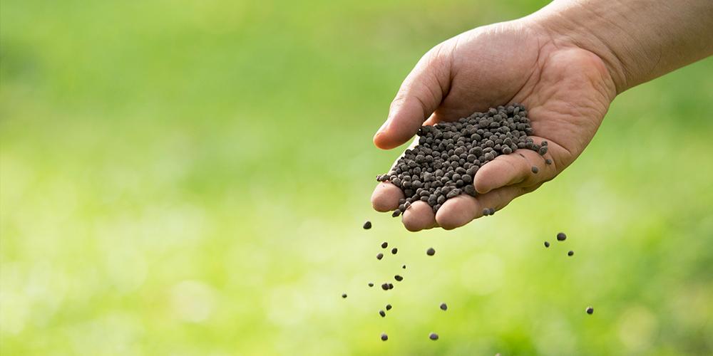 hand holding inorganic fertilizer