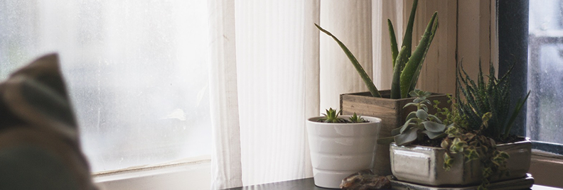 plant parenthood featured
