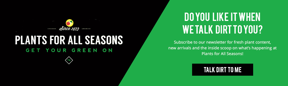Click here to subscribe to our newsletter for all the new arrivals, latest news and more!