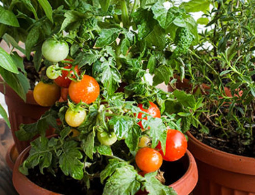 When to Plant an Edible Garden in Texas