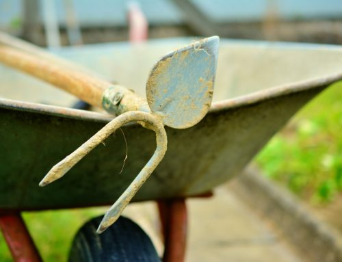 Gardening Essentials: Tools of the Trade