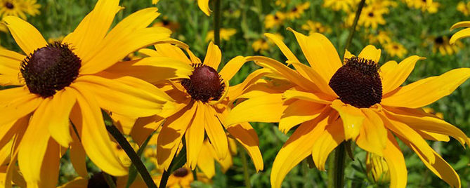 low maintenance native plants header