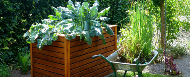 raised bed wooden garden