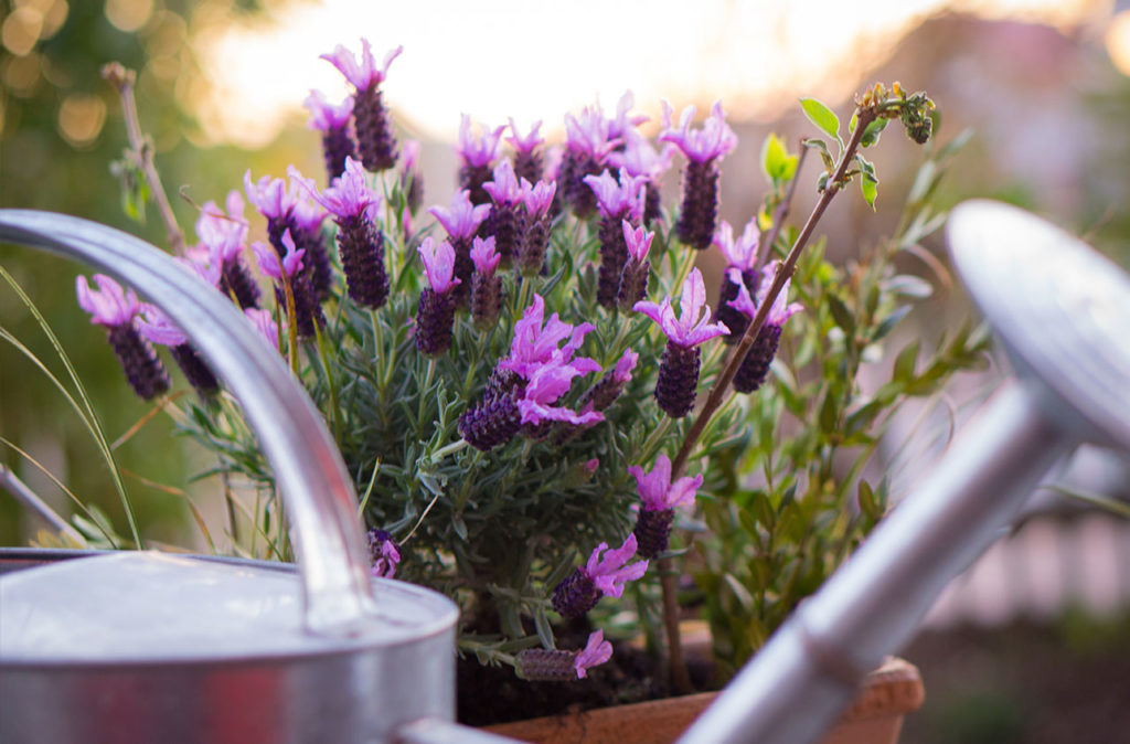 container gardening moisture