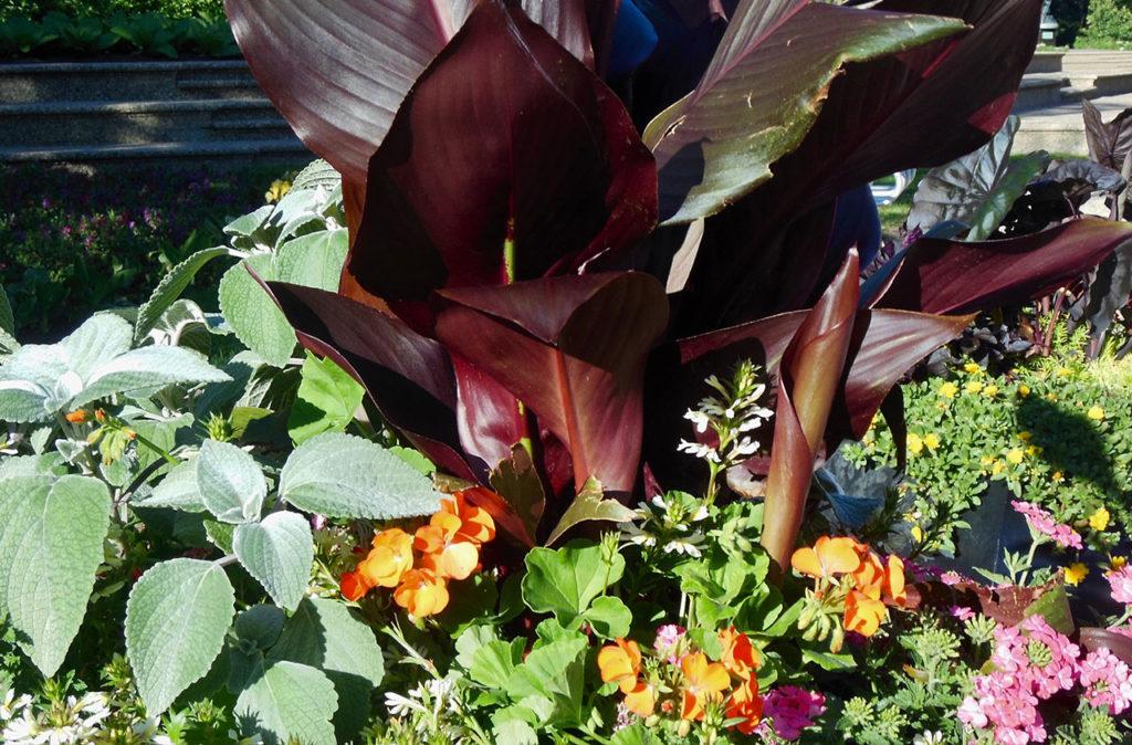container gardening tropicals moisture