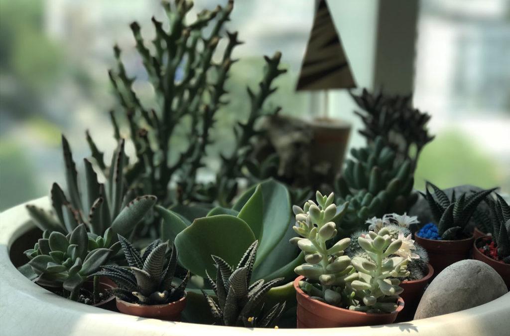 container gardening succulents moisture