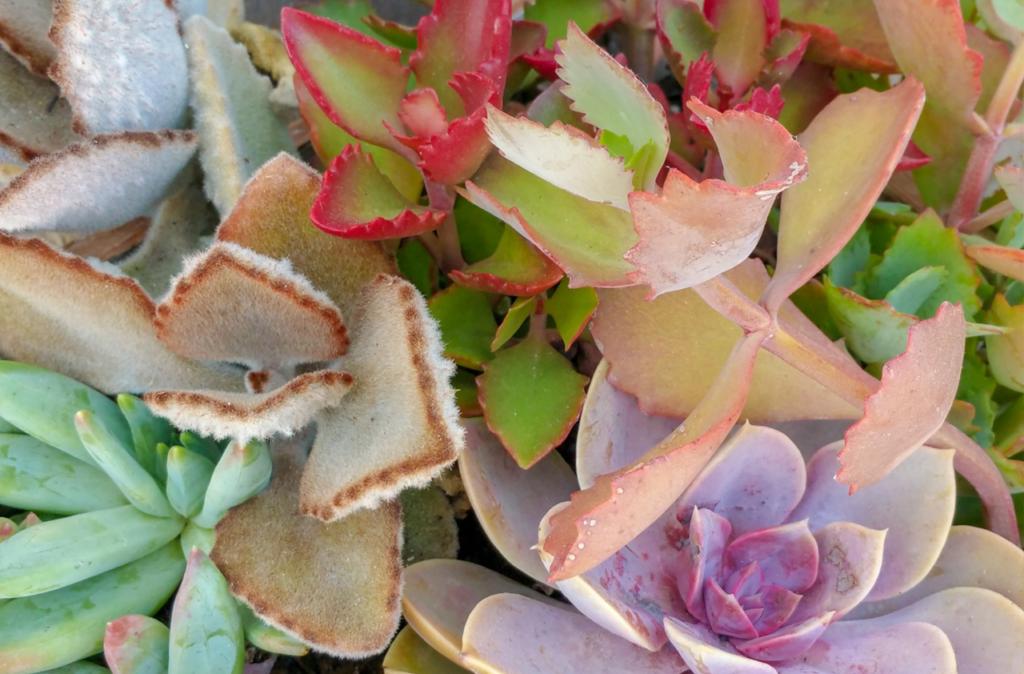 container garden succulents passive plants