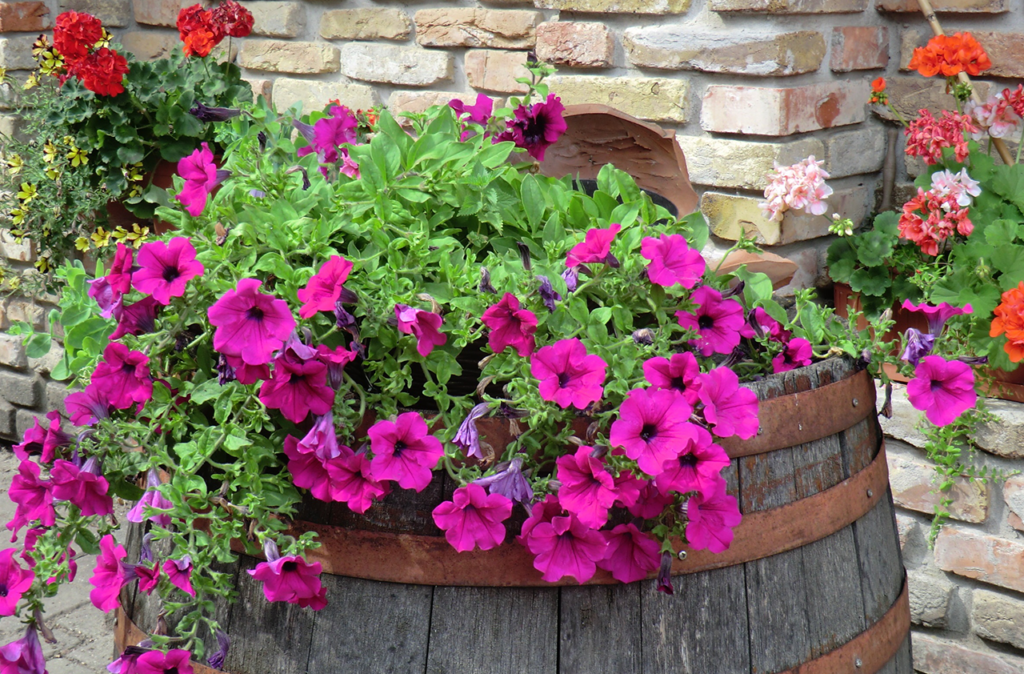 container gardening exposure