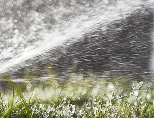 A Basic Guide to Watering Plants