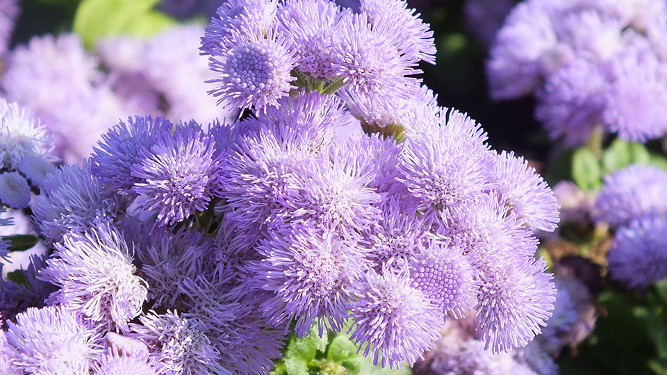 The 4 Best Garden Plants That Repel Mosquitoes – Plants for