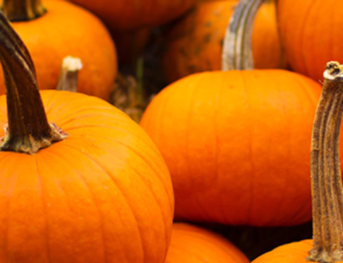 When to Plant Pumpkins in Texas