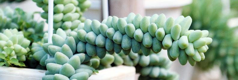 Unique Houseplants for all Seasons Houston Texas