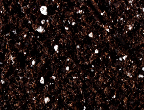 All You Need To Know About Potting With Peat