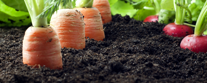 The Best Fall and Winter Vegetables to Plant in Houston