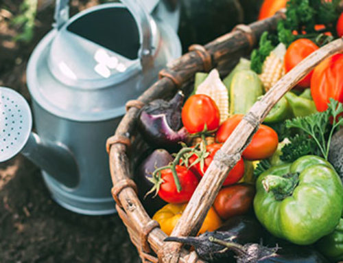 Everything You Need to Start Growing Food Organically