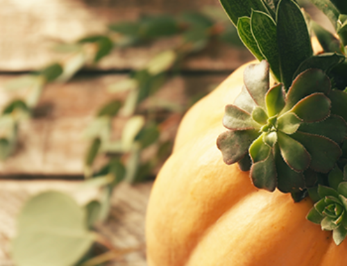 How To Make A Succulent Pumpkin Planter