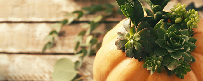 how-to-make-a-succulent-pumpkin-planter-feature