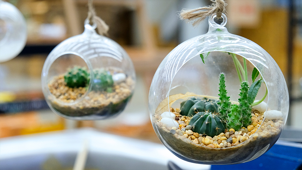 10-green-thumb-gifts-for-gardeners-hanging-terrarium