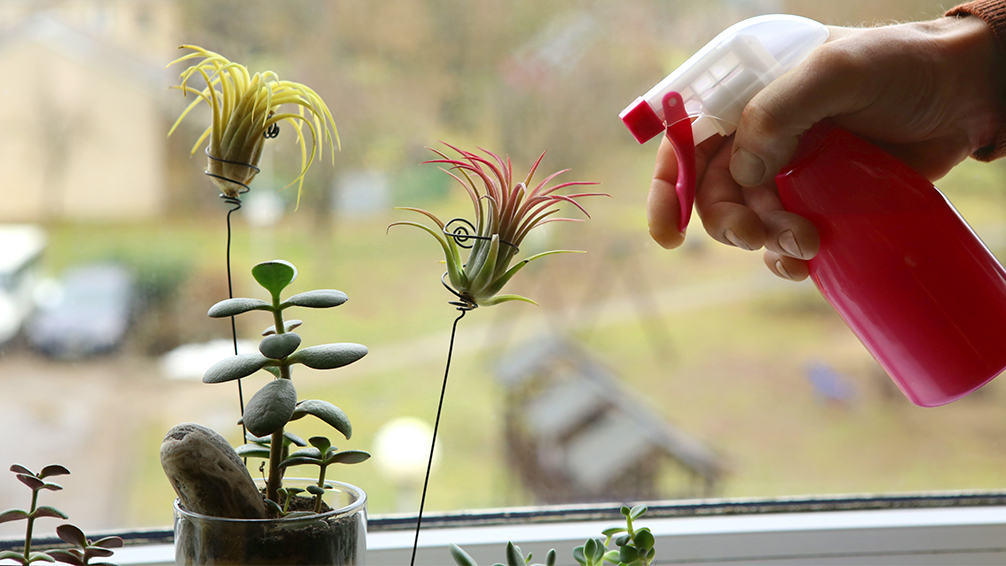 How To Decorate With Air Plants Plants For All Seasons Since 1973