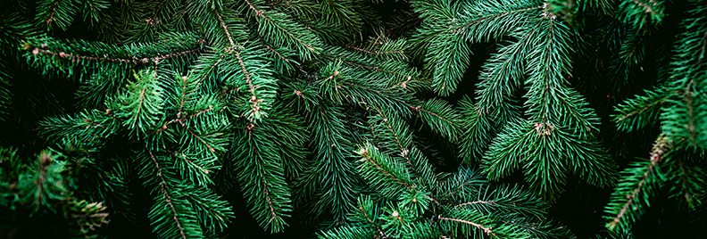 The Best Christmas Trees In Houston – Plants for All ...