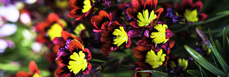 8 Bulbs To Plant Now For Spring Blooming Plants For All Seasons