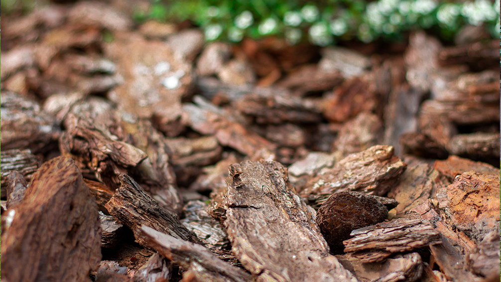covering-plants-for-winter-bark-chips-mulch