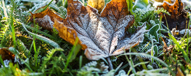covering-plants-for-winter-frost-leaf-header