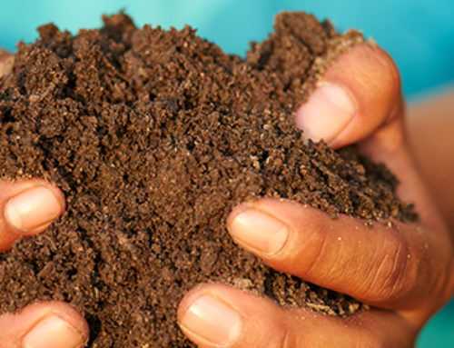Why Your Soil Absolutely Needs Compost