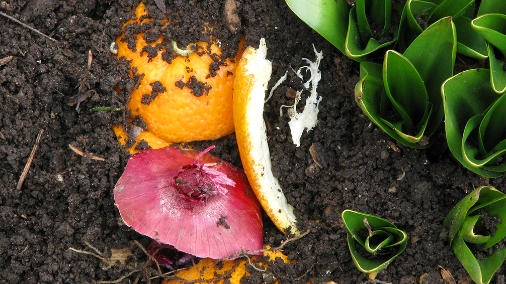 why-your-soil-absolutely-needs-compost-kitchen-food-waste-plant