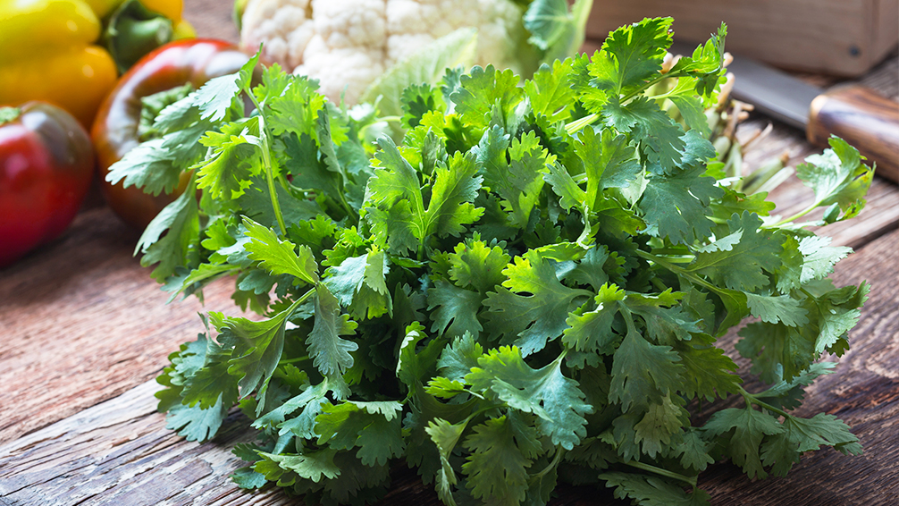 7-delicious-herbs-you-can-plant-in-the-shade-fresh-cilantro-and-vegetables