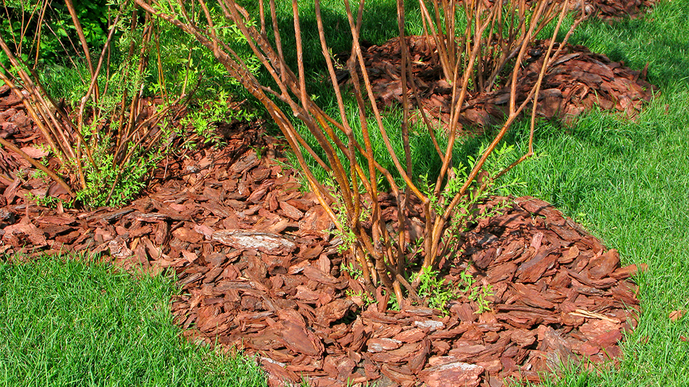 effects-of-hurricane-harvey-mulch-around-small-trees