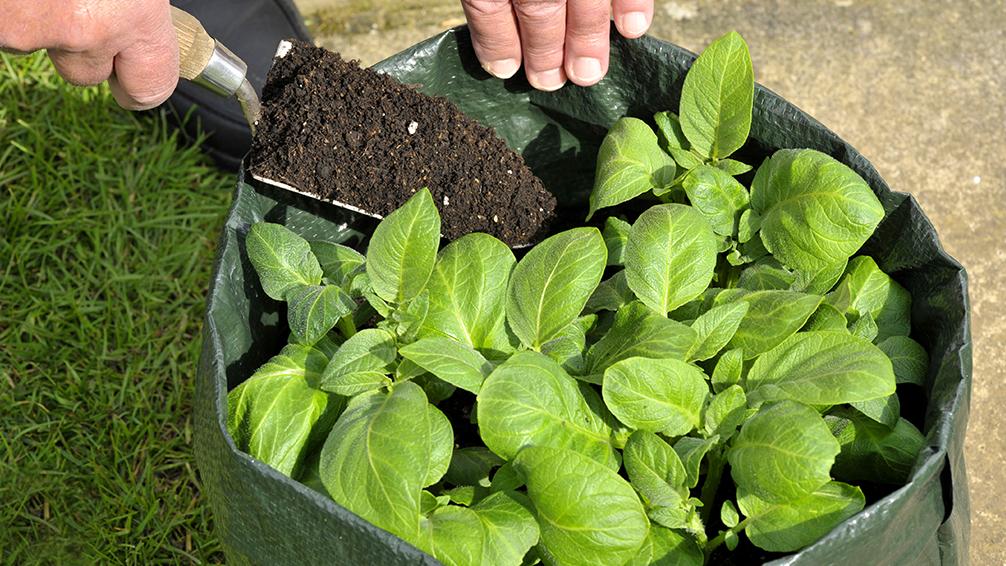 ways-to-grow-potatoes-bag-method