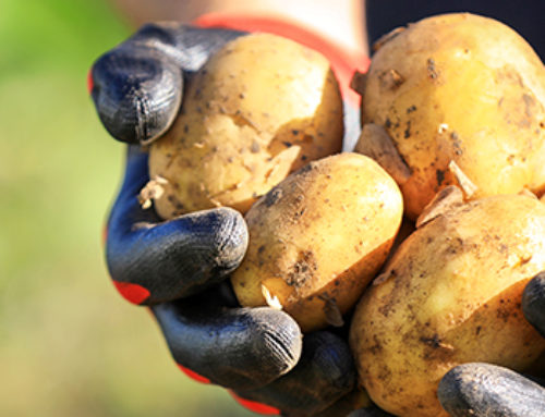 3 Easy Ways To Grow Amazing Potatoes