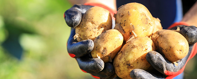 ways-to-grow-potatoes-hands-holding-fresh-potatoes-header