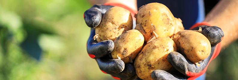 ways-to-grow-potatoes-hands-holding-fresh-potatoes-header