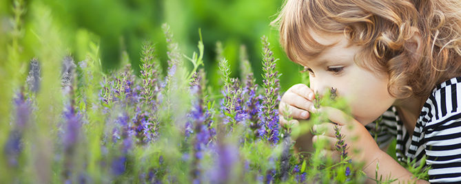 creating-wellness-garden-lavender-header