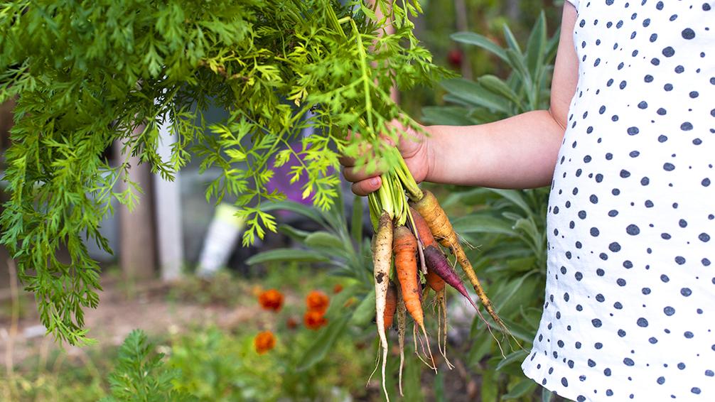 kid-friendly-vegetable-garden-child-holding-carrots