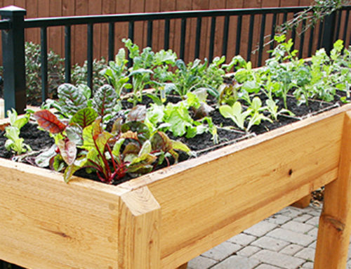 Small Space Vegetable Gardening Tips