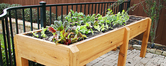 small-space-vegetable-gardening-elevated-lettuce-garden