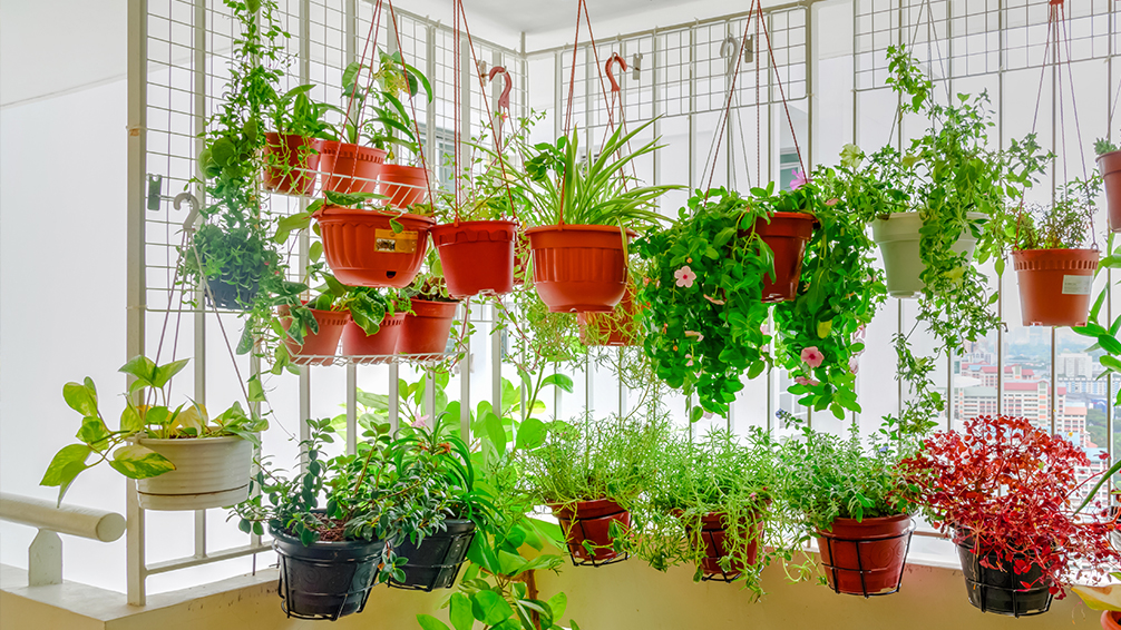 small-space-vegetable-gardening-hanging-baskets