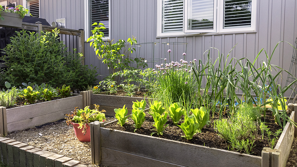 small-space-vegetable-gardening-small-backyard-elevated-beds