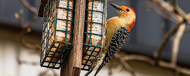 birding-5-fun-crafts-woodpecker-at-feeder-header