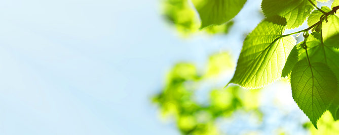 easy-sustainable-gardening-sunny-leaf-header