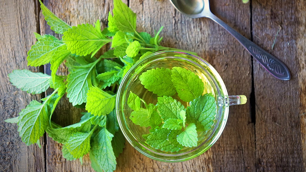 treat-your-immune-system-lemon-balm-tea