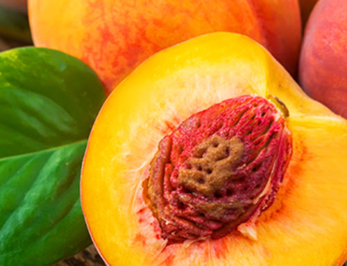 It's Peach Season! 3 Easy Recipes You'll Love