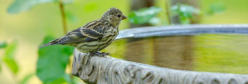 the-birds-are-back-birdbath-feature